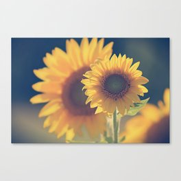 Sunflower 02 Canvas Print