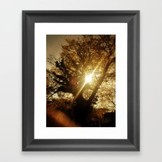 Sunset Behind the Tree Framed Art Print