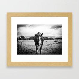 Desert Horse, II Framed Art Print