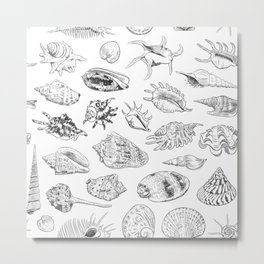 collection of sea shells, black contour on white background Metal Print