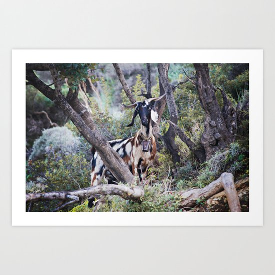 Goat on a Hill Art Print