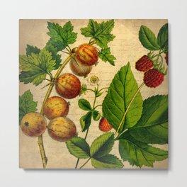 Vintage Gooseberries Metal Print