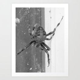 Spider 2018 II Art Print