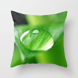 Bamboo with water drops pictures Throw Pillow