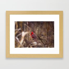Cardinal - Bright Red Male Bird Rests in Raindrops Framed Art Print