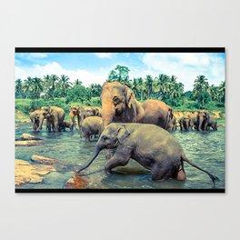 Pinnawala - Sri lanka Canvas Print