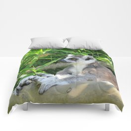 Cute and relaxed Ring-tailed lemur (lemur catta) Comforters