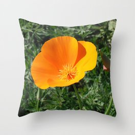 Golden Beauty. California Poppy. © J. Montague. Throw Pillow