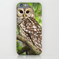 Barred Owl Slim Case iPhone 6s