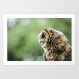 Brecon Owl Art Print