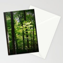 Small Tree in Sun Stationery Cards