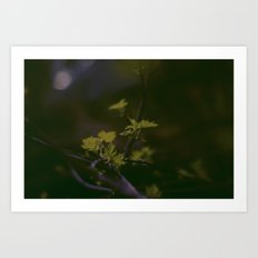 GREEN LEAVES IN THE EARTH  Art Print