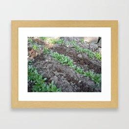 Methi Framed Art Print