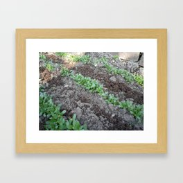 Methi Framed Art Print