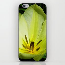 Yellow Tulip iPhone Skin