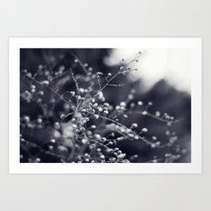 Winter Aster in Black and White Art Print