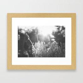 Lavender no. 1 Framed Art Print