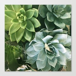 Succulent Succulents Canvas Print