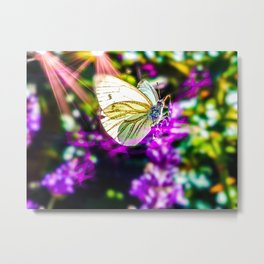 Cabbage Butterfly Metal Print