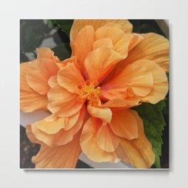 Double Orange DPSS170603c Metal Print