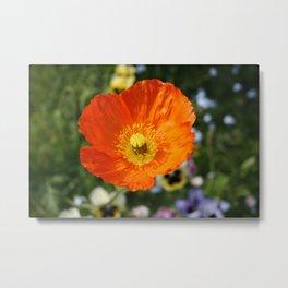 Orange Glowing Poppy by Mandy Ramsey, Haines, Alaska Metal Print