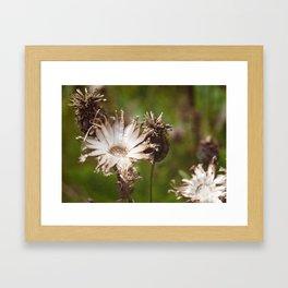 Old Flower Framed Art Print