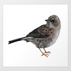 Dunnock Bird Art Print