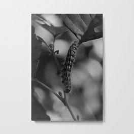 Caterpillar of the Buff-tip Moth Metal Print