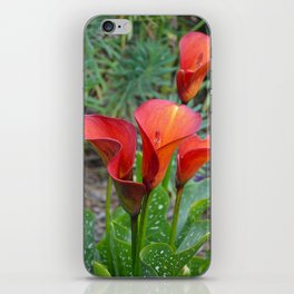 Red callalily flowers iPhone Skin