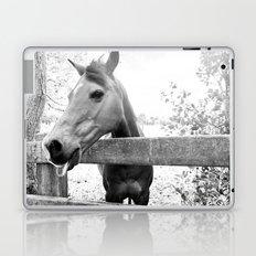 Cheeky Horse Laptop & iPad Skin