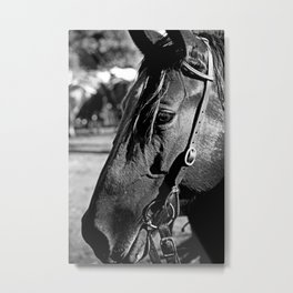 Horse-1-B&W Metal Print