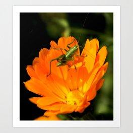 little grasshopper Art Print