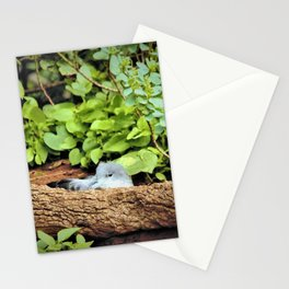 Nestling Shearwater Chick in Kauai by Reay of Light Stationery Cards
