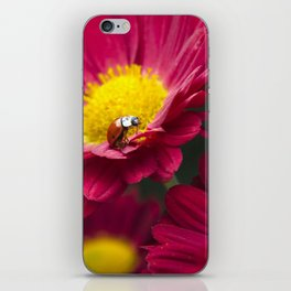Little Red Ladybug iPhone Skin
