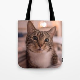 A relaxing kitty / kitten Tote Bag