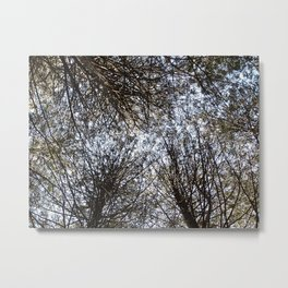 Branches Above Metal Print