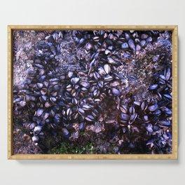 Sea Shells Serving Tray