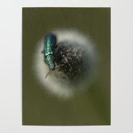 Green jewel Poster