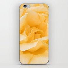 Vanilla Rose iPhone & iPod Skin