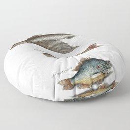 Flying Fish (Hirundo) Rudder Fish (Perca sectatrix) and Perch (Perca fluviatilis) from The Natural H Floor Pillow