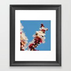 Spring 2013 02 Framed Art Print