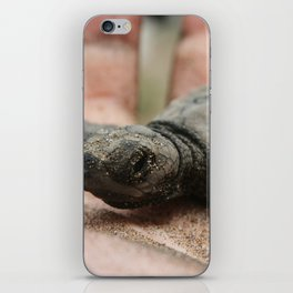 baby olive ridley sea turtle iPhone Skin