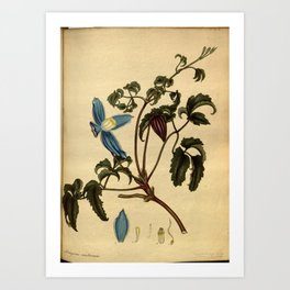 Flower crataeva capparoides Caper like Crataeva Art Print