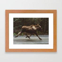 Running Moose Framed Art Print