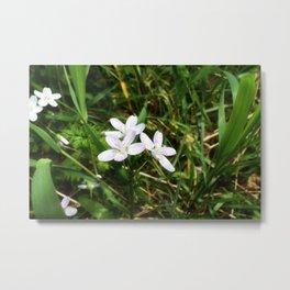 Spring Beauty 07 Metal Print