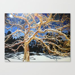 Minnesota Tree Canvas Print