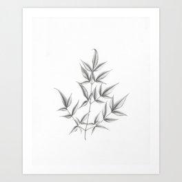 Nandina domestica Art Print