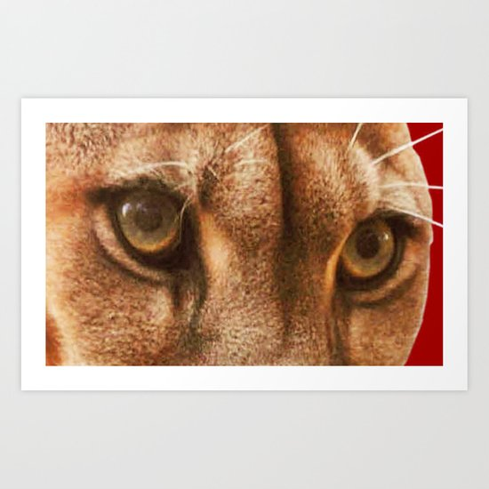 The Eyes Of The Cougar Art Print