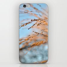 golden leaves against a blue sky. iPhone & iPod Skin