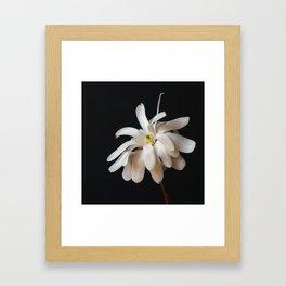 Square Star Magnolia Framed Art Print